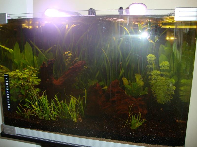 Mon premier bac + algues Dsc01419