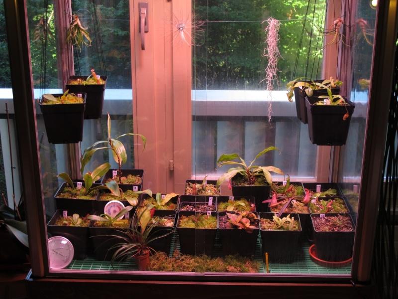 Construction terrarium lowland pour Nepenthes Img_0210