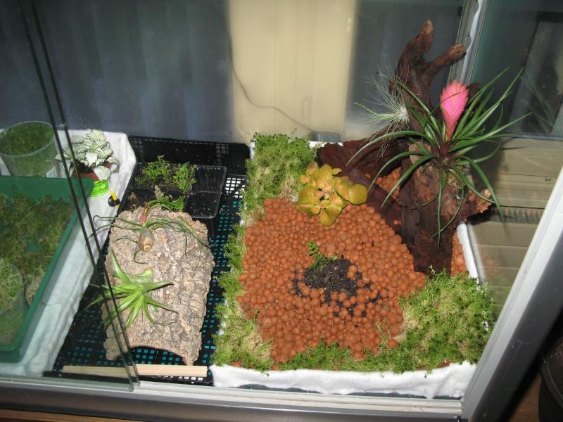 Construction terrarium lowland pour Nepenthes Img_0714