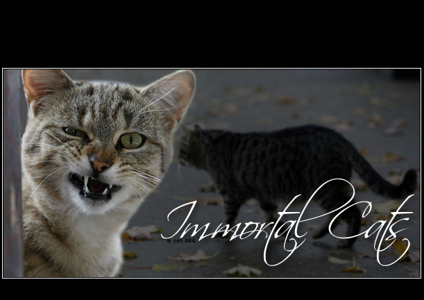 Immortal Cats