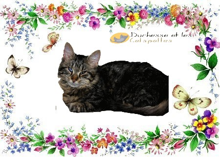 DUCHESSE ET LES CATS'PATTES