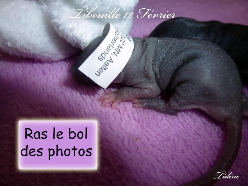 Tibouille & ses Bouillessss sss - Page 3 12_fev13