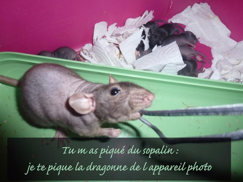 Tibouille & ses Bouillessss sss - Page 3 12_fev14