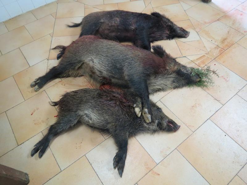 Saison de chasse au Grand Gibier 2012/2013 - Page 38 Img_1020