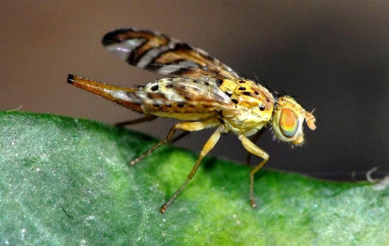 une mouche  Ff_05510