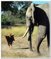 question sur l'éléphant Tippi-10