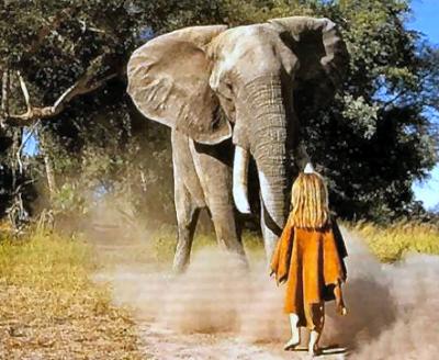 question sur l'éléphant Tippi_11