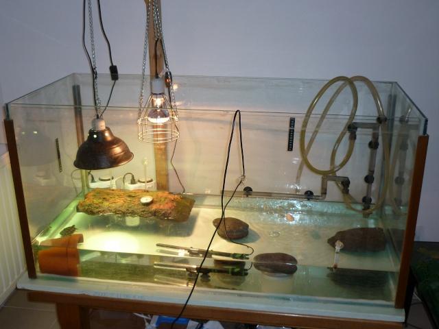 santé pour un juvenile mauremys sinensis URGENT svp Aquari11