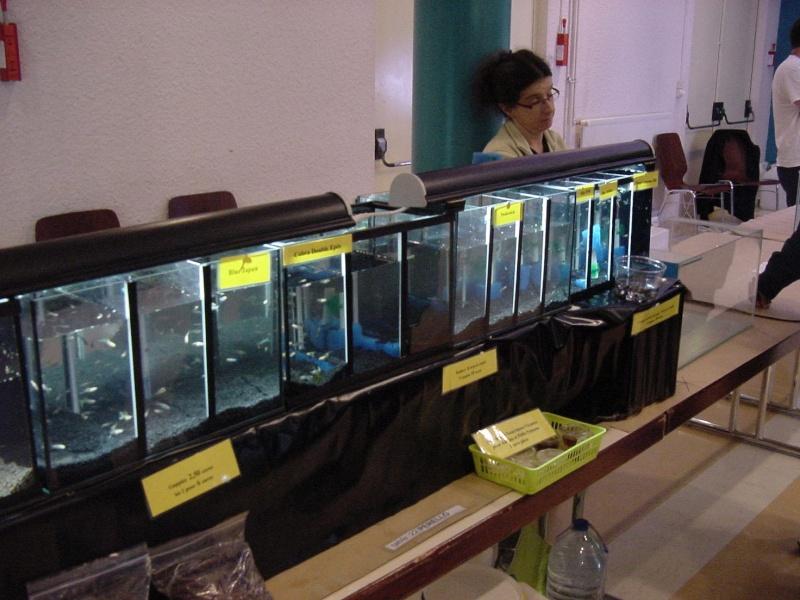 Bourse à Rémilly le 25 Novembre 2012 - Page 2 Dsc00197