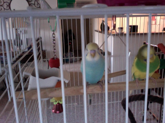 Look at what my parakeet did for me. AMAZING! Photo_34