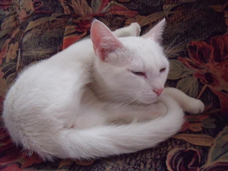Halma, chatonne de 2 mois environ adoptée  par LAETITIA (85) Chats_20