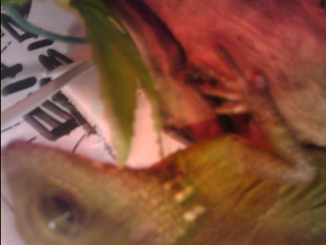 Urgent mauvaise mue perd son doigt  - Page 2 Dragon10