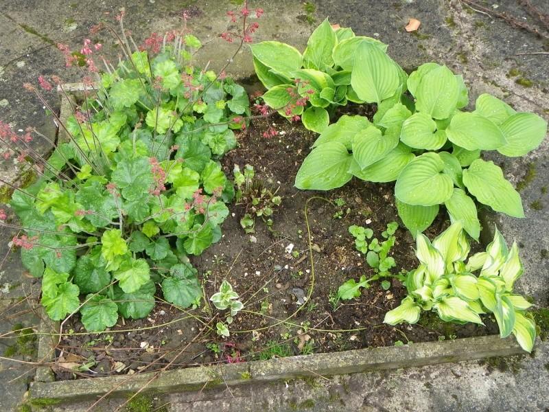 Quelques plantes d'ombre ou mi-ombre - Page 2 Imgp2111