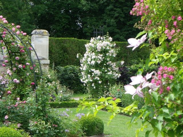 (60) Roseraie de l'Abbaye Royale de Chaalis Imgp2910