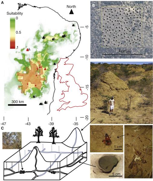 [Recherche d'endroits] Elle est où???  _  La termitière du Brésil. Gr110