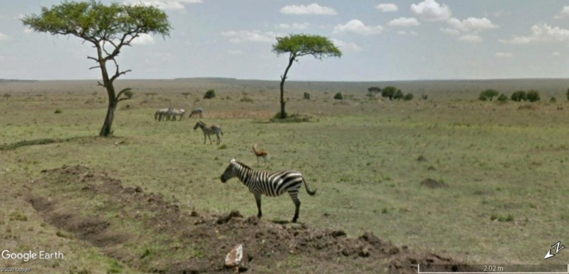 STREET VIEW : Les animaux - Page 10 Zzobre10