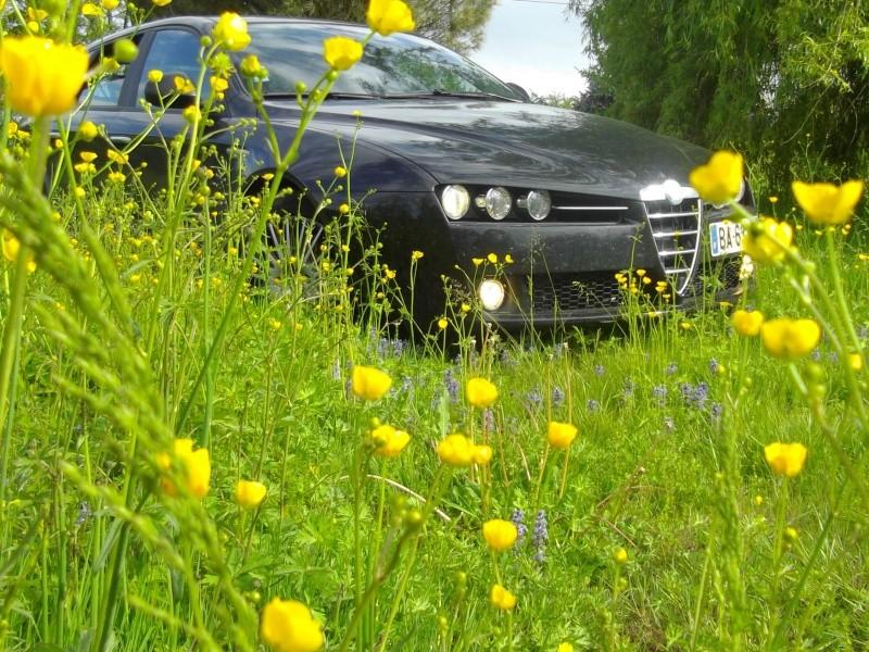alfa 159 made in jaune d oeuf Imgp0811