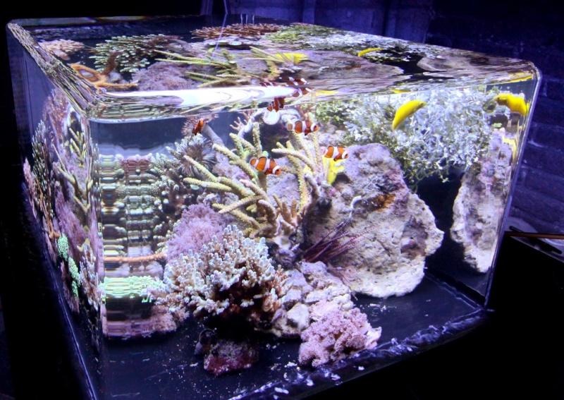 aquarium sans bord Zeroed10