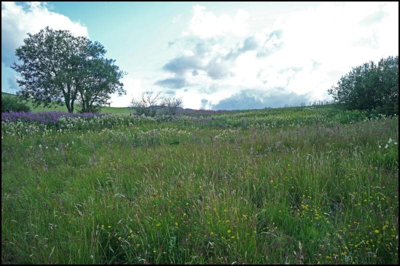 Le Chant du Marais L1000711