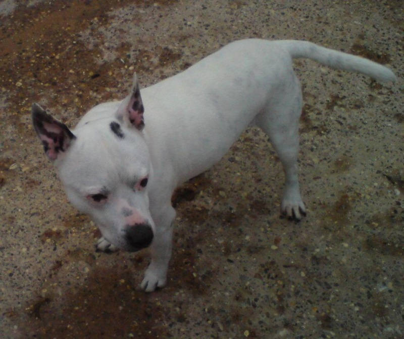 GEORGE (DEAF) has a Forever home staying for good at foster home Deaf_g10