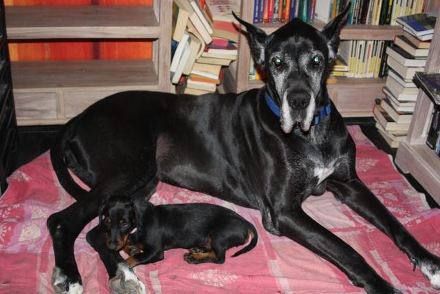notre dogue allemand et nos chatous+ fanais ds la peau d une blonde :p 00510