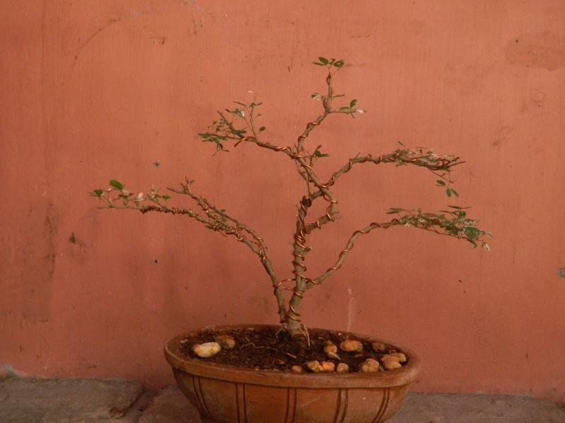 help reveal the hidden form of my first bonsai.. Dscn1810