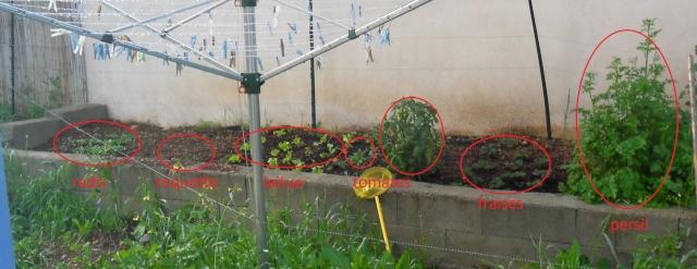 mon jardin fruitier.... miam! Sdc12010