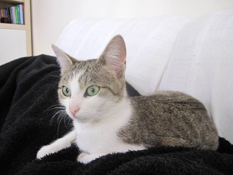 Franela, fauve et blanche, née en 2010 - Page 1 Franel13