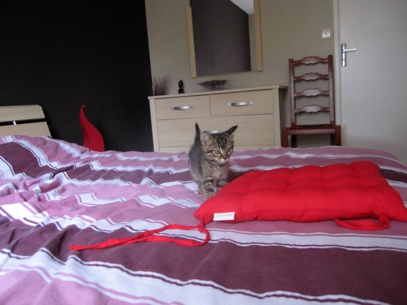 Honey, chatonne tigrée, née le 01/04/12 Honey_12