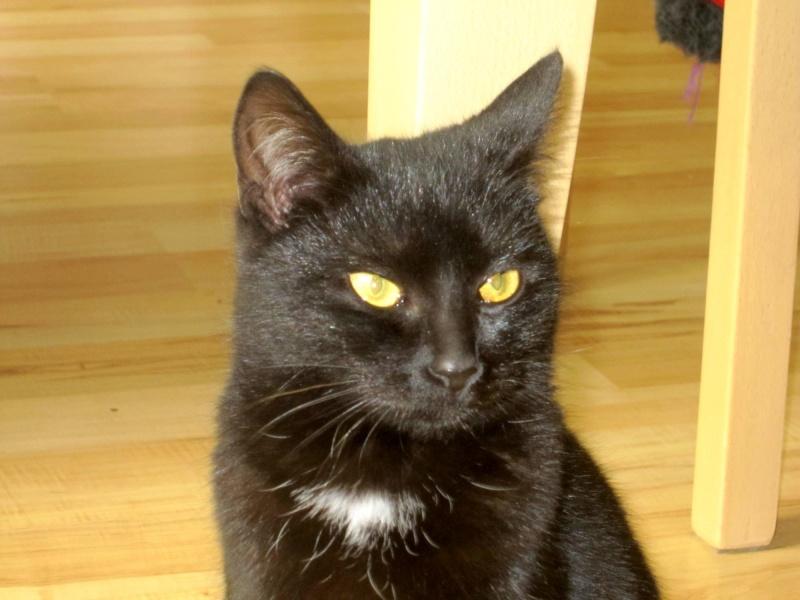 Hyona, chatte à robe noire, né en juin 2012 Hyona_10