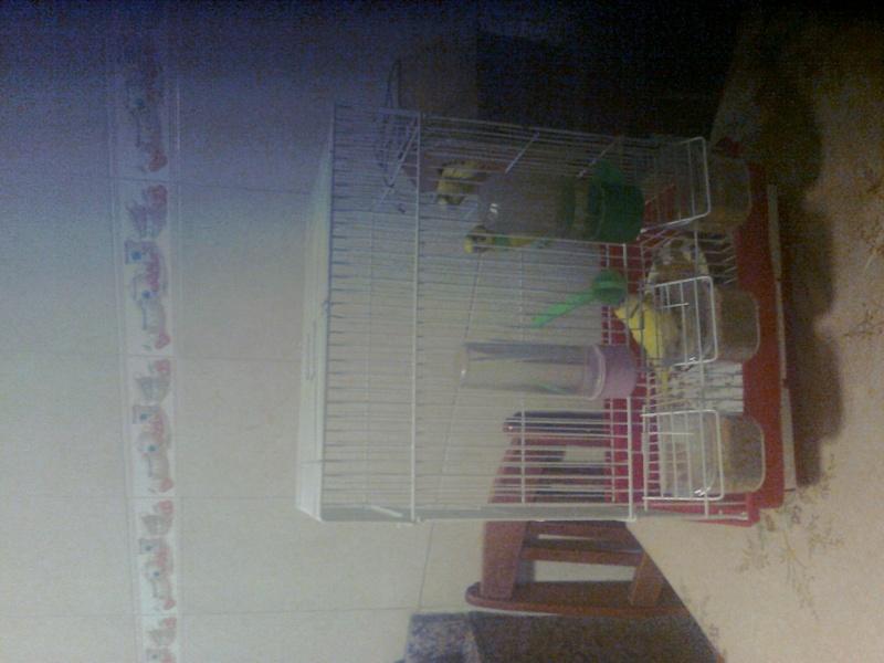 coment aider un  bébé perruche? - Page 2 Photo011