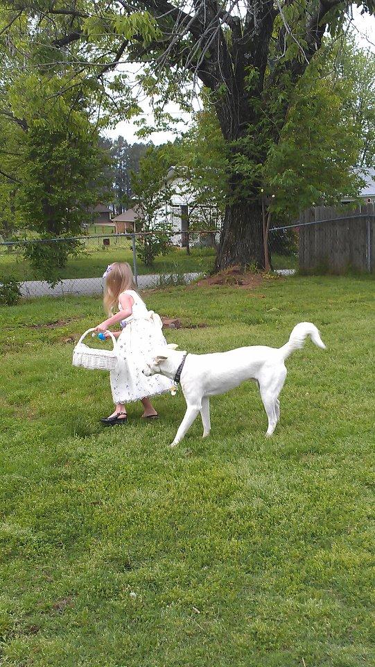 Chase loves egg hunts! 54869110