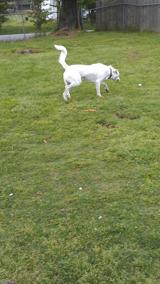 Chase loves egg hunts! 55945210