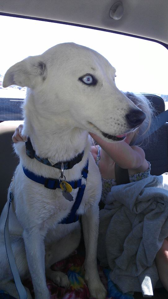 Bella, Chase, and Dakota  57919410