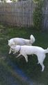 Bella, Chase, and Dakota  Imag0314
