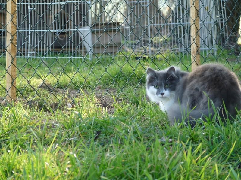 GRACE petite chatonne poil mi-long de 6 mois  - Page 3 P1120810
