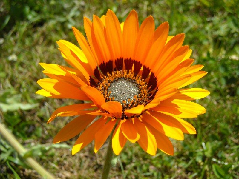 Begleitpflanzen der Kakteen in Haus und Garten Arctot10