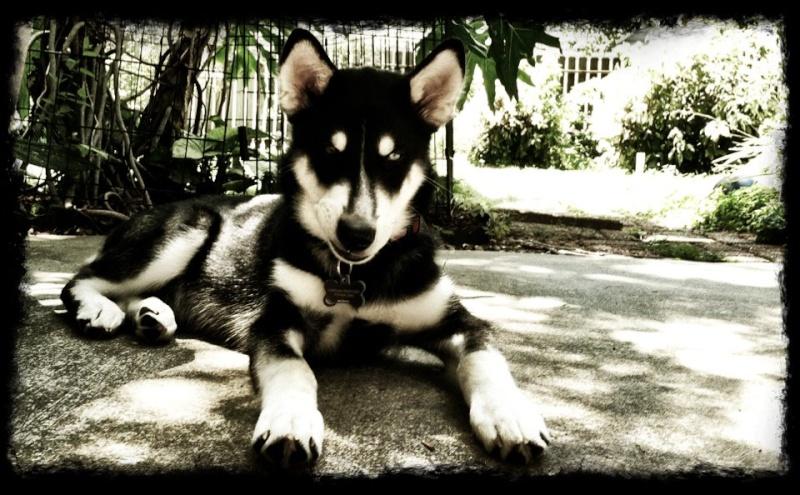 Niko's scrapbook (updated 8/4/12) 57982010