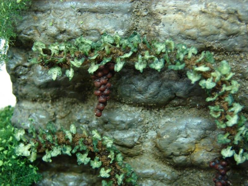 Alter verlassener Vorgarten mit großer Stützmauer - Seite 2 Dsc04711