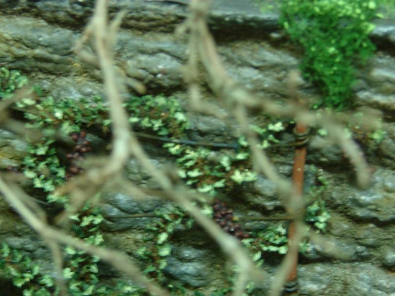 Alter verlassener Vorgarten mit großer Stützmauer - Seite 2 Dsc04724