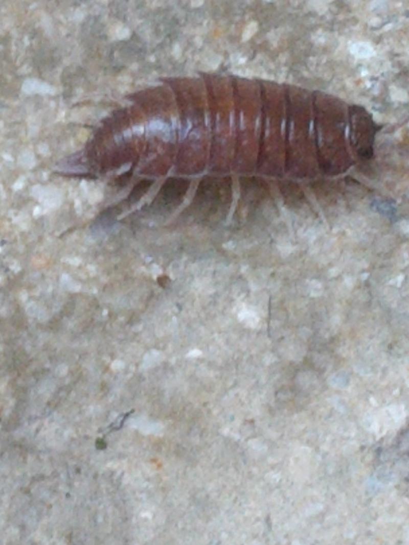 Luminaire Miroir Salle De Bain Castorama ~ C Est Quoi Cet Insecte J En Ai 50 Dans La Salle De Bain