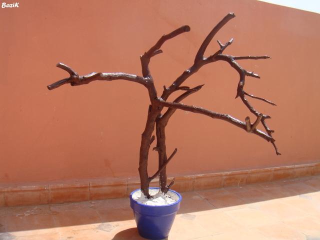 Un arbre à Perruches !!! - Page 5 Dsc00325