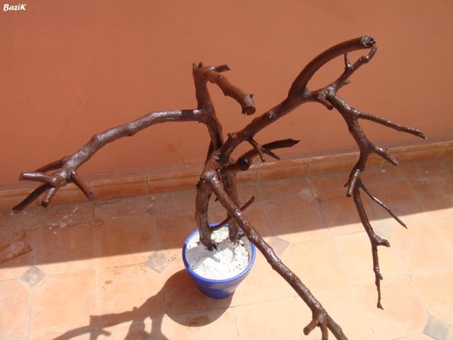 Un arbre à Perruches !!! - Page 5 Dsc00326