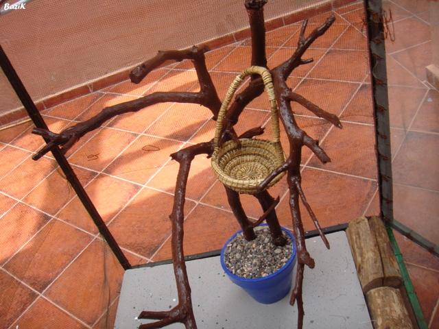 Un arbre à Perruches !!! - Page 5 Dsc00327