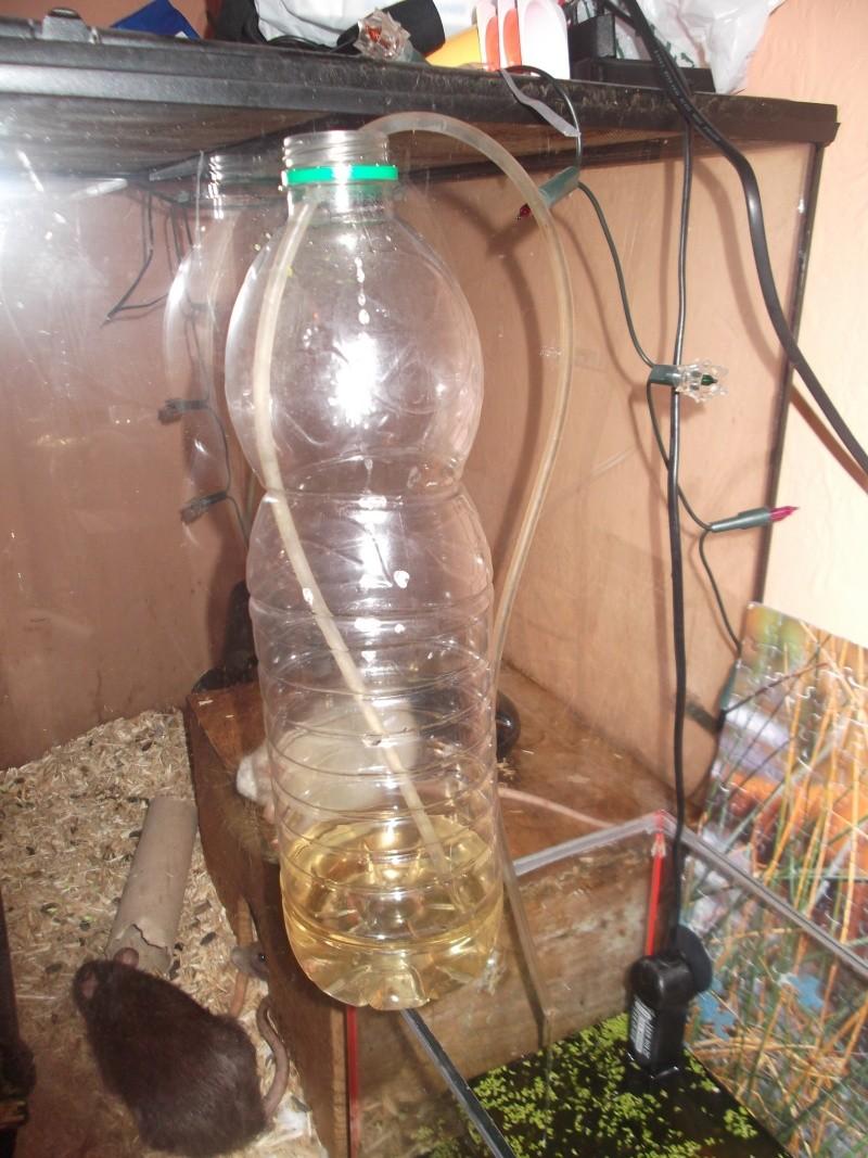 essai repro naturel bac avec vase  Dscf0316