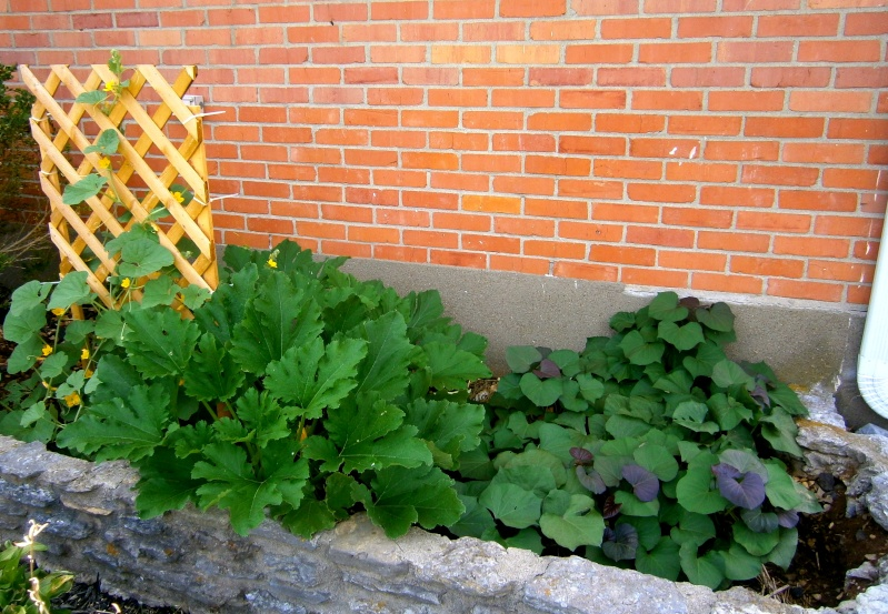 Edible Landscaping, SFG style - Need ideas! Frontb10