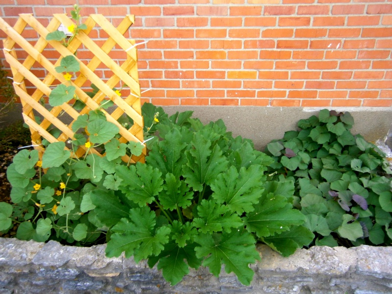 Edible Landscaping, SFG style - Need ideas! Frontb13