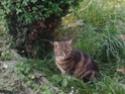 Ma chatte Noon est partie le.... N111