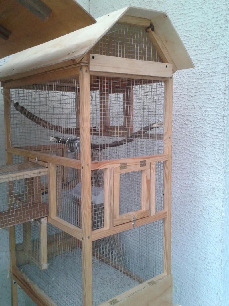 Mes perruche 2012  2012-013