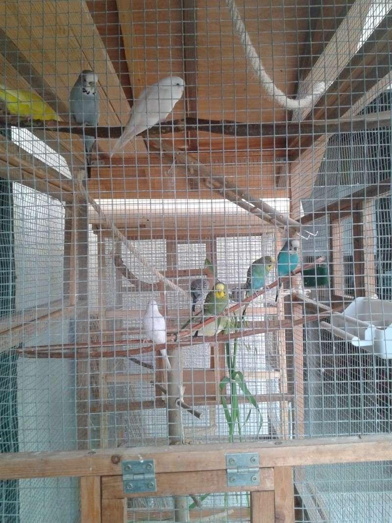 Mes perruche 2012  2012-015
